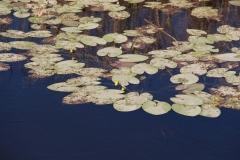vodene-oaze-6